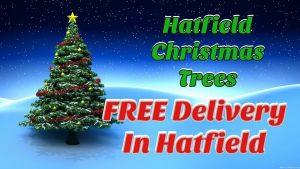 Real Hatfield Christmas Trees 10